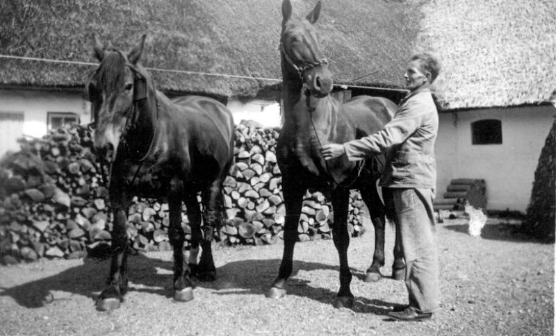 heste1