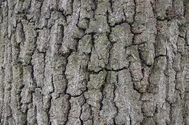 Egetræ 3