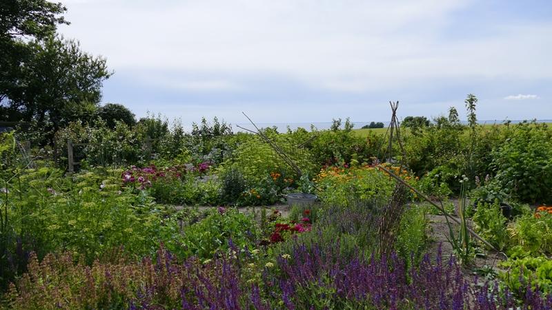Et lille kig i haven i sommeren 2015 (klik på fotoet for at se næsten samme perspektiv i foråret 2010)