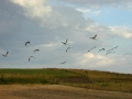 Storke4.jpg